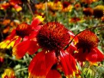 Juli-Blumen Stockfotografie