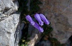 Juliańscy Alps, Slovenia Fotografia Royalty Free