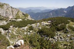 Julian alps - knee timber royalty free stock photo