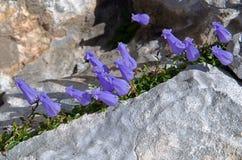 Julian Alps ,Slovenia Royalty Free Stock Images