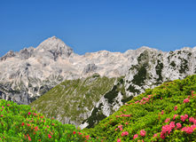 Julian Alps, Slovenia Royalty Free Stock Photos