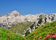 Julian Alps, Slovenia Royalty Free Stock Photos