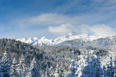 Julian alps with Triglav in the winter. Snow-covered spruce forest in the foreground Stock Photo