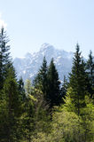 Julian Alps vom Wald Stockfoto