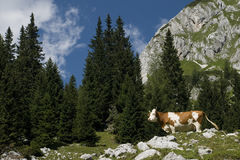Julianische Alpen, Slowenien Lizenzfreie Stockbilder
