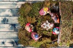 Juljulkrubba med den heliga familjen i kojan och de tre kloka männen av gammal wood bakgrund royaltyfria bilder