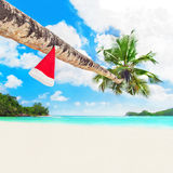 Juljultomtenhatt på palmträdet på den tropiska havstranden Royaltyfri Fotografi