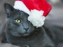 Julkatt - Gray Cat Santa, julhusdjur med Santa Claus H Royaltyfri Foto