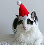 Julkatt i jultomtenhatt Arkivfoton