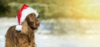 Julkort med hunden royaltyfria foton