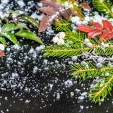 Julkortet av evergreen förgrena sig, det röda bäret med snö, slut royaltyfri bild