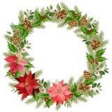 Julkrans av den röda julstjärnan och sidor Ställe för din text stock illustrationer