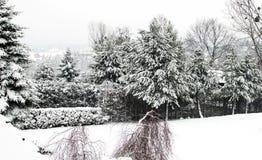 Jullandskap - träd som täckas med vit snö Royaltyfria Bilder