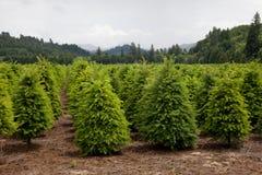 jullantgårdtree Royaltyfri Bild