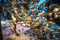 Julljus på det Rine trädet Arkivfoto