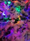 Julljus på en snöig buske royaltyfri fotografi