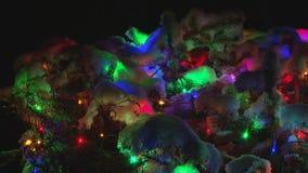 Julljus på träd arkivfilmer