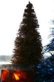 julmorgon royaltyfri foto