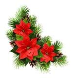 Julordningen med sörjer ris, kottar och julstjärnaflöde Fotografering för Bildbyråer