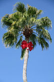 Julpalmträd Arkivfoton