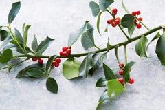 Julpynt järneksidor med röda bär arkivbild