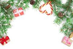 Julram av granträdfilialen med godisrottingar och askar som isoleras på vit bakgrund med kopieringsutrymme för din text Royaltyfri Foto