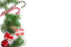 Julram av granträdfilialen med godisrottingar och askar som isoleras på vit bakgrund med kopieringsutrymme för din text Arkivfoto