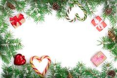 Julram av granträdfilialen med godisrottingar och askar som isoleras på vit bakgrund med kopieringsutrymme för din text Royaltyfri Fotografi