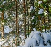 Julskog i klar vinterdag royaltyfria bilder