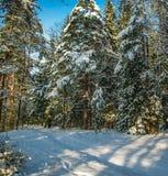Julskog på en klar solig dag royaltyfri bild