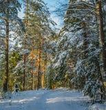 Julskog på en klar solig dag royaltyfri fotografi