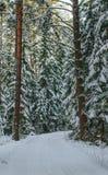 Julskog på en klar solig dag arkivbild