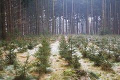 julskogtrees arkivbild