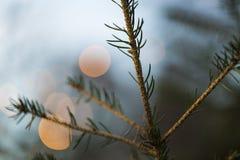 Julsmåskog med suddighetscirkeln tänder bakgrund Royaltyfria Bilder