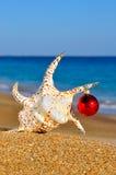 Julsnäckskal på den sandiga stranden Royaltyfria Foton