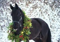 Julstående av den svarta härliga hästen arkivbilder