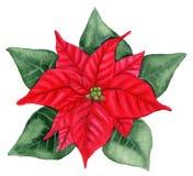 Julstjärna Royaltyfri Fotografi