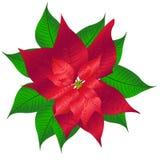 julstjärna Royaltyfri Bild