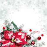Julstjärna, röda struntsaker och julgran, textutrymme Arkivbilder