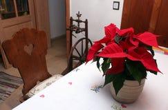 Julstjärnablomma i traditionellt tappningrum Royaltyfria Bilder