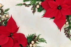 Julstjärnablommagräns Fotografering för Bildbyråer