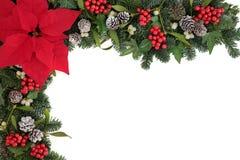 Julstjärnablommagräns Royaltyfri Foto