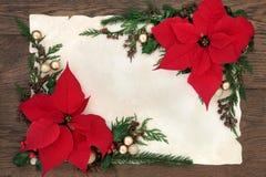 Julstjärnablommagräns Royaltyfri Fotografi