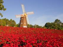 Julstjärnaträdgård Arkivfoto