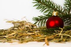 Julstruntsak med den unga prydliga trädfilialen Royaltyfria Foton