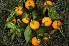 Julsymboler - gran-träd och tangerin på en mörk träbac Royaltyfria Bilder