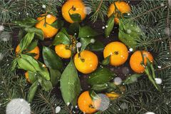 Julsymboler - gran-träd och tangerin på en mörk träbac Royaltyfria Foton