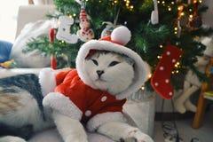 Jultid! Royaltyfri Fotografi
