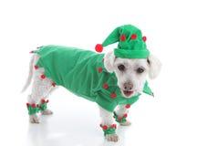 Jultomten älva eller gyckelmakare i grön dräkt och hatt Arkivbilder