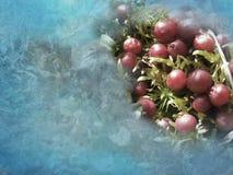 Jultranbär Arkivbild